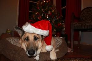 Boomer at Christmas