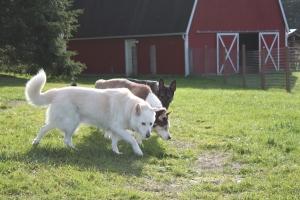 Kenya, Rex, Pixie at Hidden Creek Farm