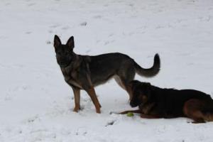 pixie loki snowday