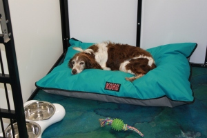 Snuffy tries out the new beds