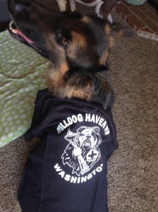 Dogs of Anarchy