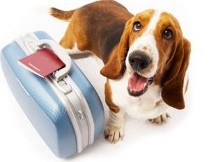dog-suitcase1