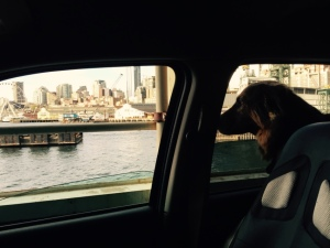 Adventure dog on the ferry