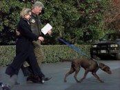 clinton-dog